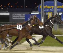 Maiden trotter Clyde (inner), driven by Craig Thornley, beats Majestic Rose, driven by Matthew...