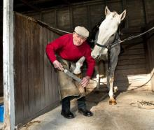 85-year-old farrier Brian Wilson is plying his trade as the plating inspector at Riccarton on...