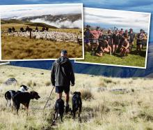 Conrad Sim heads out mustering on Mt Dasher Station, which is celebrating 100 years since its...