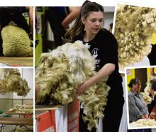 Getting into the woolhandling action at the Waimate Spring Shears yesterday are (clockwise, from...