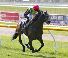 Southland-bred The Chosen One, trained at Cambridge by Murray Baker and Andrew Forsman, rates...