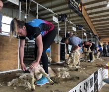 Southern Steel team member Abby Erwood entered the novice shearing competition at the Winton A...