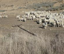 A drought-hit Canterbury farm in 2015. Hurunui Adverse Events Committee chairperson Winton Dalley...