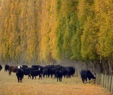 Shifting market access dynamics has the potential to change the distribution of beef exports...