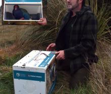 Orokonui Ecosanctuary  conservation manager Elton Smith releases a new male takahe called Bennett...