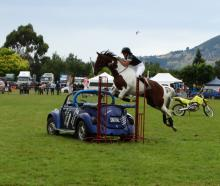 Trick rider Talia Allison returned to the Otago Taieri A&P Show on Saturday with her horse Shelby. Here, Allison jumps Shelby over a car while riding bareback and without a bridle. Photos: Brenda Harwood