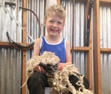 Sid Strachan (6) takes a break from ''shearing''on his family's farm in North Otago yesterday....