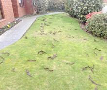 Kedleston Drive residents are fed-up with the mess honey locust trees are making. Photo Supplied