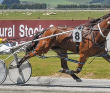 Robyns Playboy will start for new training partners Ross and Chris Wilson at Winton next weekend....