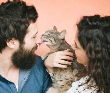 Cat-themed dating app Tabby has launched just in time for International Cat Day. Photo: Getty Images