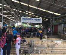Hazlett Livestock junior livestock representatives help out in the Hazlett Farmyard at last year...