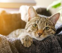 Would you like to see rules in place for the control of cats in urban areas? Email your views to...