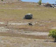 British tourist Nick Baggott says the cat he saw was not of an ordinary size and he had never...