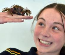 Tahuna Normal Intermediate pupil Aurora Spur (12) gets a close look at Harry, the hairy seaweed...