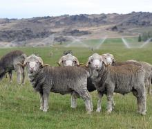 The New Zealand Merino Company has achieved a record pretax profit of $4.01million for the year...