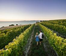 Wandering among the vines in Blenheim. PHOTO: DESTINATION MARLBOROUGH