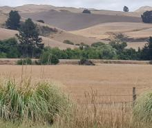 Drought has been declared in North Canterbury again. Photo: Robyn Bristow