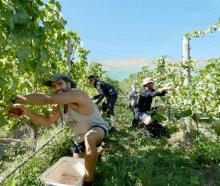At work at Quartz Reef Bendigo Estate in Bendigo are (from left) Martin Ledesma Conrado, of...