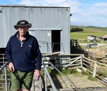 West Otago farmer Graham Walker walks on a rail at Heriot saleyards. PHOTOS: SHAWN MCAVINUE