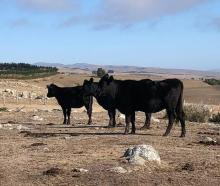 Akaroa Farmer Hamish Menzies says it has been extremely dry at his property for some time. Photo:...