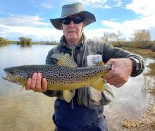 A good brown trout from Mathias' Dam to end the season. PHOTO: CHRIS WEDDELL