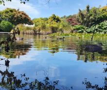 Ducks make use of the shade in the lake at the Oamaru Public Gardens on January 12. Photo: Seth...