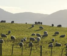 The Strong Wool Action Group is striving to increase returns to growers. Photo: Stephen Jaquiery.
