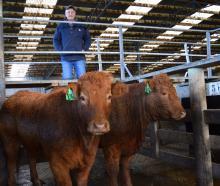 Doug Lindsay Memorial Trophy winner Evan Ferris, of Waikaia, admires a Limousin heifer (right)...
