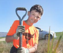 Eddie Weir (10), from Waipiata, plants the first native plant in a trial area for the Tiaki...