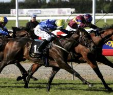 The New Zealand Cup Meeting will go ahead with a limited number of punters this year. Photo:...