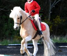 Harper Nutting (6), of Cromwell Pony Club, on her pony Prada, competes in the Dunedin District...