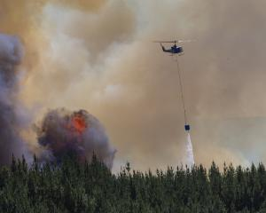 City Forests in Dunedin has closed its forest estates to the public because of the extreme fire...