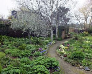 There are small treasures galore in Maggie McDonald's Karitane garden. Photos: Gillian Vine.