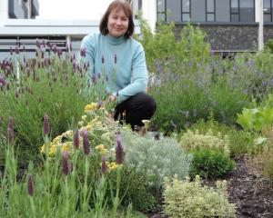 Lisa Burton in a herb plot at the living campus. Photos: Charmian Smith.