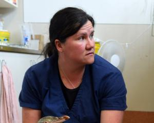 Wildlife veterinarian Dr Lisa Argilla says caring for unwell penguins is physical and demanding...