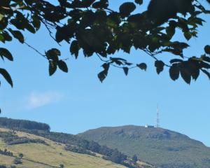 The leaves of a birch in  Dunedin Botanic Garden frame a view of Mt Cargill. Photos: Gillian Vine.