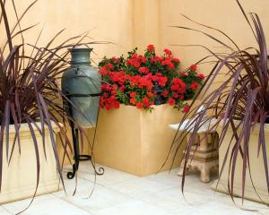 Australians choose Flower Carpet Scarlet (centre) over other varieties. It is flanked by Festival...