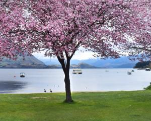 Trees burst with colour  in front of the playground on the eastern lakefront in Wanaka. Photo:...