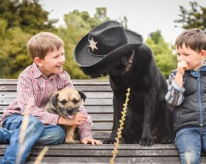 Stanley  (6) and Ruari (3) Wilson  with their canine pals Sheriff Pike and Biddi. Photo: Teresa...