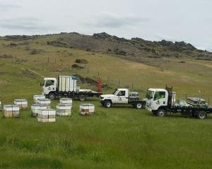 Otago Bees Ltd hives ready to be distributed in Little Valley, near Alexandra. Photo: Supplied