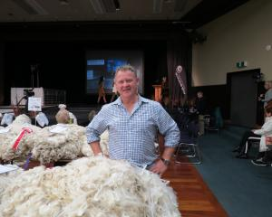 Upper Clutha A&P Society president Doug Stalker admires some of the top class fleeces on show during the annual national Royal Agricultural Society's Golden Fleece competition, Lake Wanaka Centre, Wanaka, last Saturday. Photos: Yvonne O'Hara