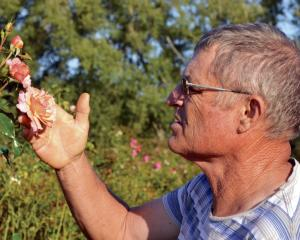 Tauranga rose breeder Rob Somerfield. Photos: Supplied