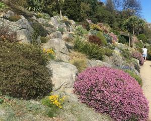 Spring colour in the Dunedin Botanic Garden's rock garden. Photos: Gillian Vine