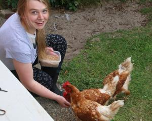 Anna Canning (16), of Dunedin, feeds chickens in Tomahawk on New Year's Day. Photo: Bill Van Der...