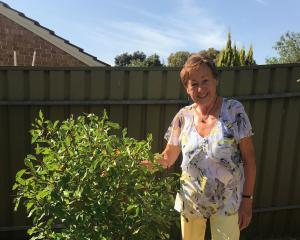 Ilse Nienhaus with her pride and joy, a prune tree. Photos: Gillian Vine