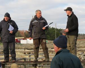 Auctioneers taking a pause during sales of store sheep at the Lorneville saleyards, near Invercargill, last week are (from left) Kelvin Lott, Carrfields; Russell Cockram, PGG Wrightson; and Mike Broomhall, PGG Wrightson. Photos: Yvonne O'Hara