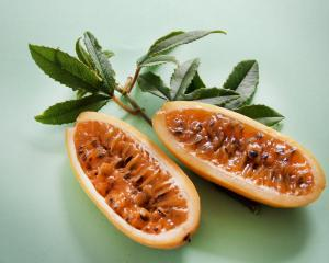 Banana passionfruit is an invasive weed.