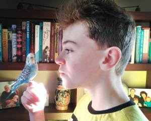 Making the most of having time to teach his budgie 'Typhoon' to talk is Tom Davis (13) of...