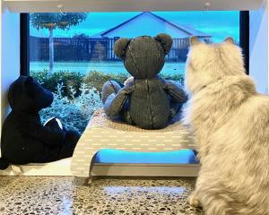 The Patrick family's cat, Luna (2), watches over the neighbourhood with her bear friends. PHOTO:...