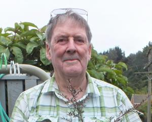 Peter Shone  with one of the manuka he grew from seed. PHOTOS: GILLIAN VINE